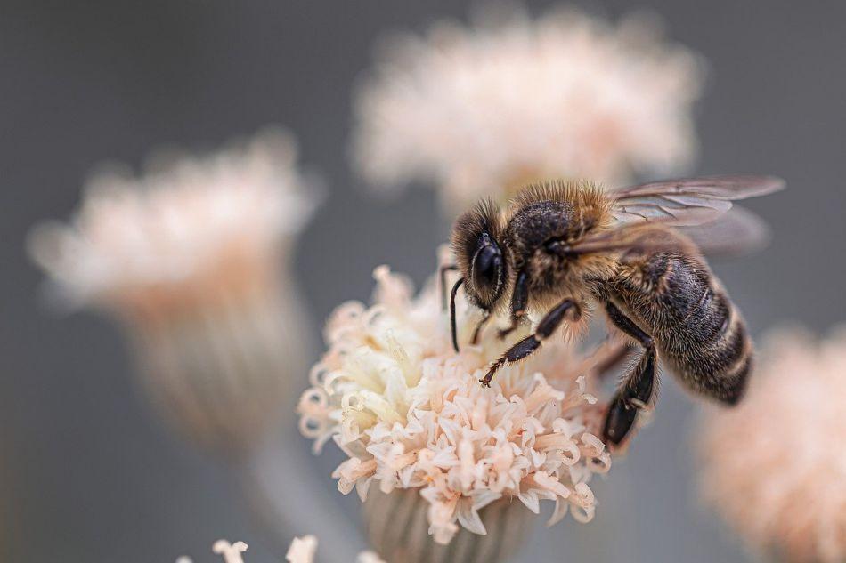 čebelarstvo v sloveniji